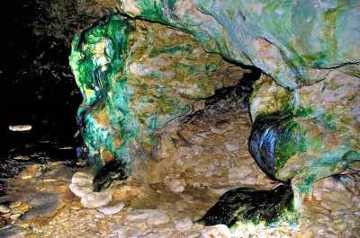 Animal Flower Cave in Barbados