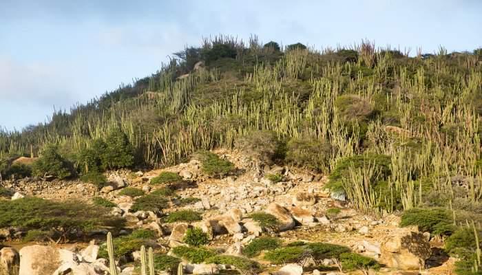 Aruban landscape