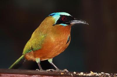 Asa Wright Nature Centre in Trinidad and Tobago