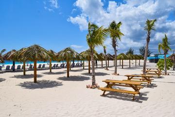 Barbados Shore Excursion: Mount Gay Rum Tour and Carlisle Bay Beach