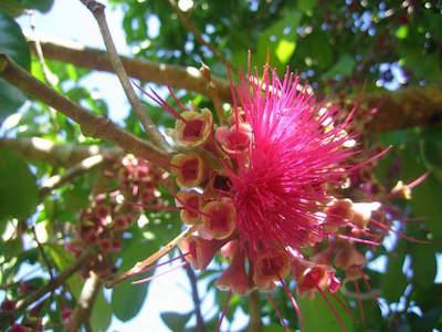 Belize Botanic Gardens in San Ignacio