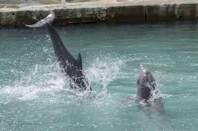 Bermuda Dolphin Quest