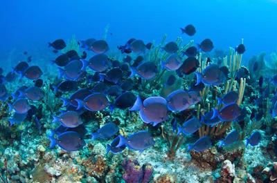 Buccoo Reef in Trinidad and Tobago
