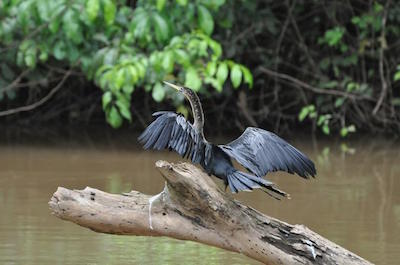 Ca–o Negro Wildlife Refuge in Costa Rica