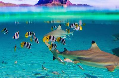 Coral Gardens in Bora Bora