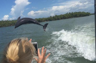 Cruises and dolphin watching Tours in St. Petersburg