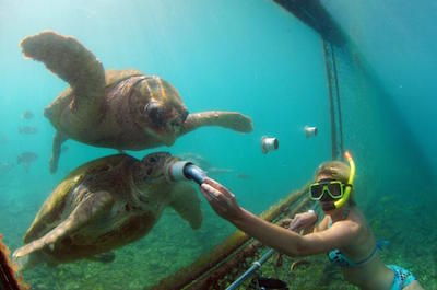 Curacao Shore Excursion: Animal Encounter and Snorkel Tour