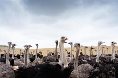 Curacao Shore Excursion: Ostrich Farm and Hato Caves Adventure