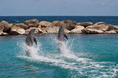 Curacao Dolphin Academy