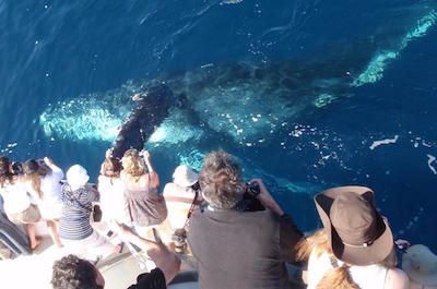 Dolphin and Whale Watching Tours in Los Angeles