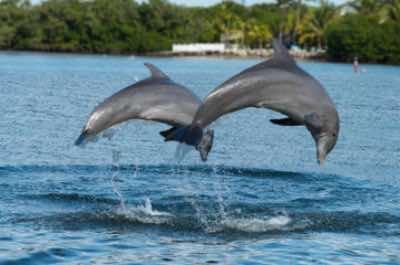 Dolphin Island in Punta Cana