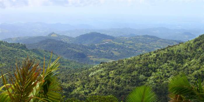 Puerto Rico  El Yunque National Forest