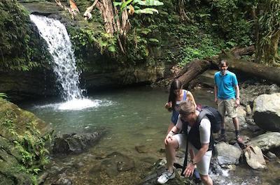 El Yunque National Forest Tour in Fajardo