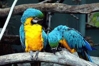 Emperor Valley Zoo in Trinidad and Tobago