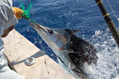 Fishing, Charters and Tours in St. Lucia