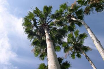 Freeport Shore Excursion: Half-Day Freeport Tour in Bahamas