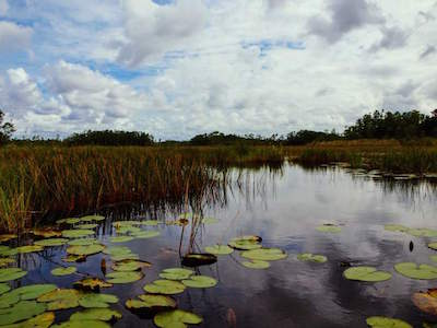 Grassy Waters Nature Preserve in West Palm Beach