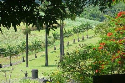 Habitation Clement in Martinique