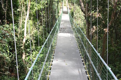 Hanging Bridges Eco Tour and Beach Break in Roatan