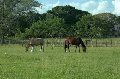 Horseback Riding Tour in Belize City