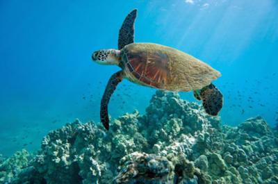 Kahului Shore Excursion: Snorkeling Adventure