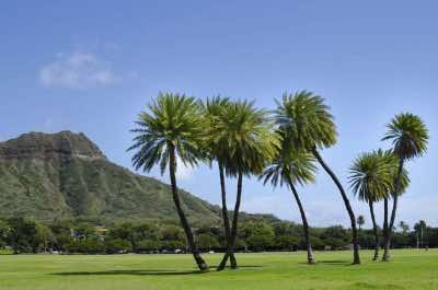 Kapiolani Park in Oahu