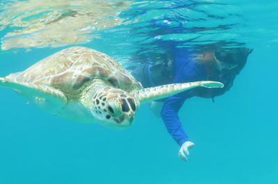 Kayak and Sea Turtle Snorkel with Beach Break