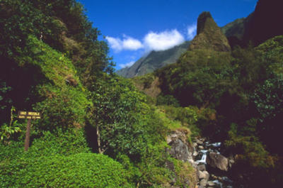 Lahaina Shore Excursion: Tropical Plantation Tour and 'Iao Valley
