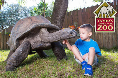 Lowry Park Zoo in Tampa