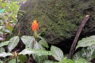 Lyon Arboretum in Honolulu