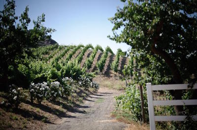 Malibu Countryside Wine Hike