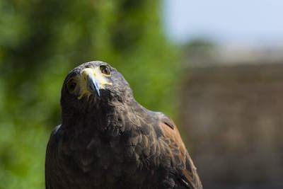 Malta Falconry Centre