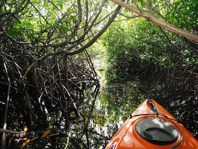 Mangrove Forest Kayak Tour Grand Cayman