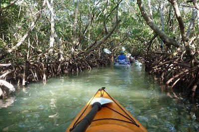 Mangrove Tunnel Kayak Eco-Tour in Sarasota