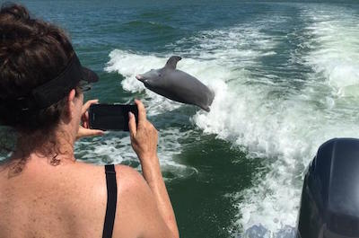 Marco Island Dolphin-Watching Tour