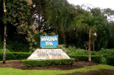 Mauna Loa Macadamia Nut Factory