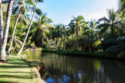 McBryde Garden in Kauai