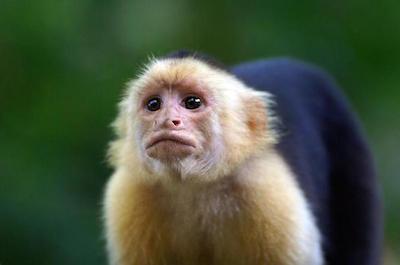 Monkey Park in Tamarindo