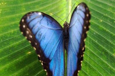 Monteverde Butterfly Gardens in Costa Rica