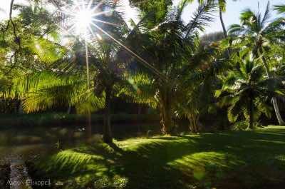 National Tropical Botanical Garden in Kauai