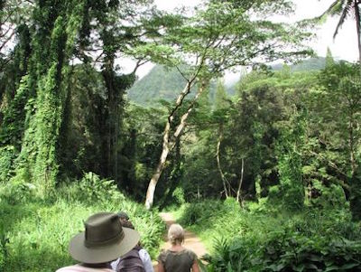 Nature & Wildlife In Oahu