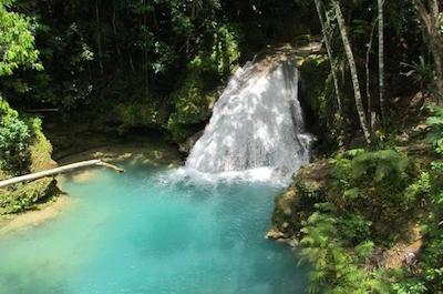 Nature, wildlife in Negril