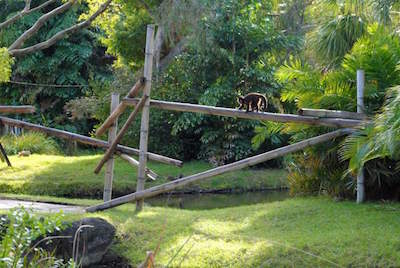 Palm Beach Zoo & Conservation Society in West Palm Beach