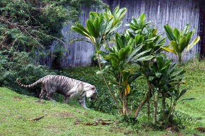 Panaewa Rainforest Zoo and Gardens