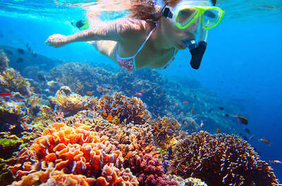 Private Snorkeling Tour in St. Kitts