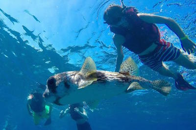 Scuba and snorkeling in Puerto Plata
