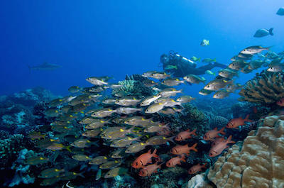 Scuba Diving in Bora Bora