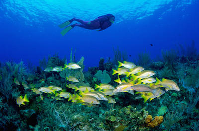 Scuba Diving in Key West