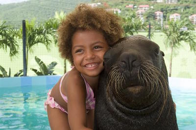 St. Thomas Sea Lion Encounter