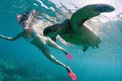 Sea Turtle and Dolphin Snorkeling Adventure in Oahu